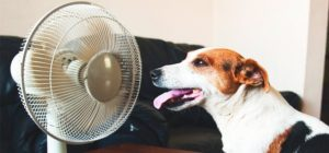 Pet Safety in Summer