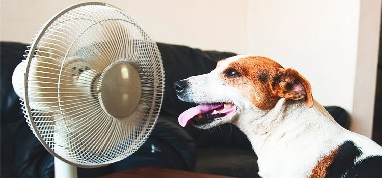 Pet Safety in the Summer Heat
